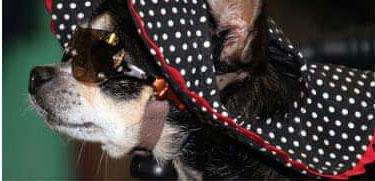 Pavia: lascia i suoi beni in eredità a due cani ed altre associazioni