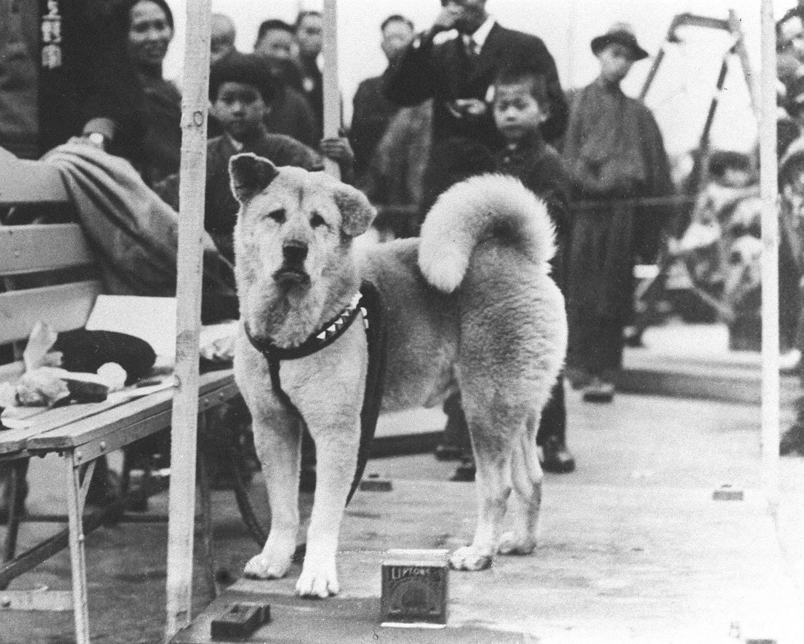Cani famosi: Hachiko