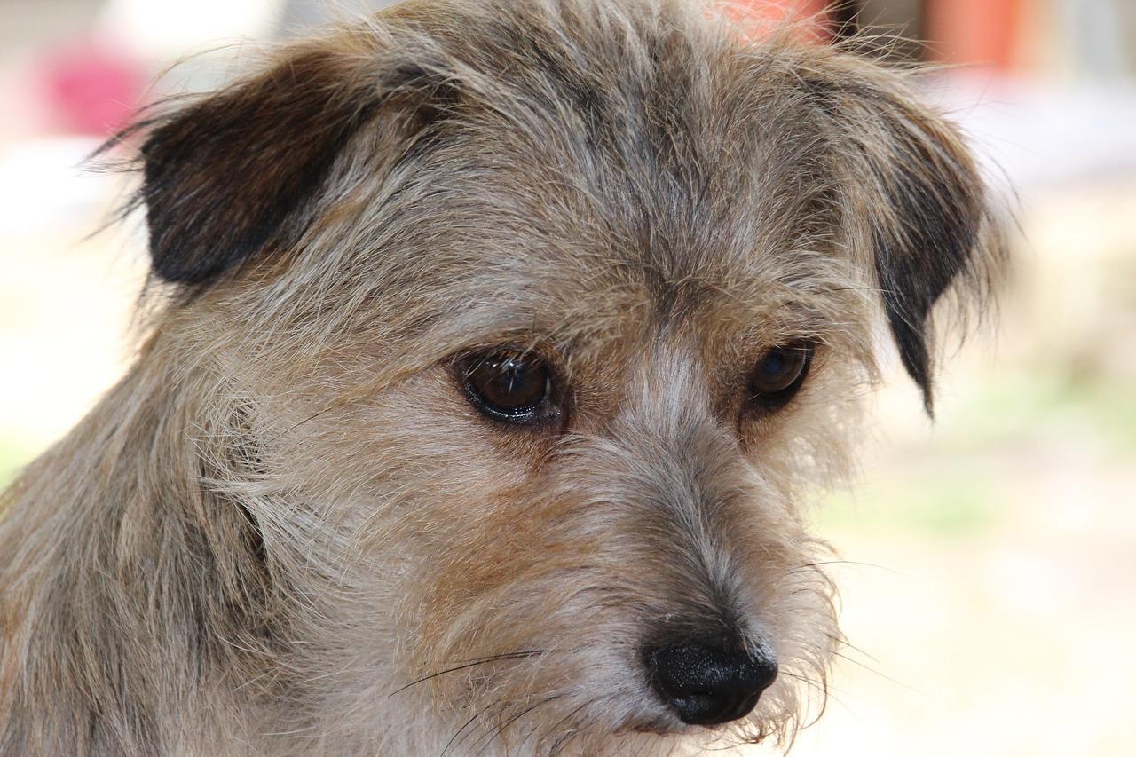 Scopri quali sono i problemi della pelle più frequenti nei cani