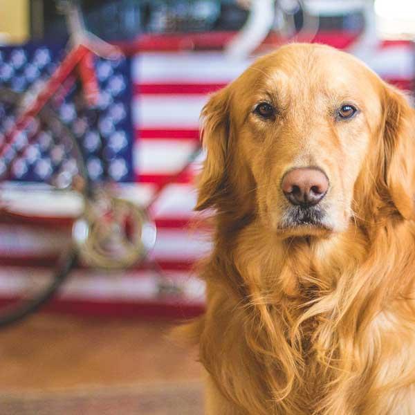 Minnesota: un cane al terzo mandato come sindaco