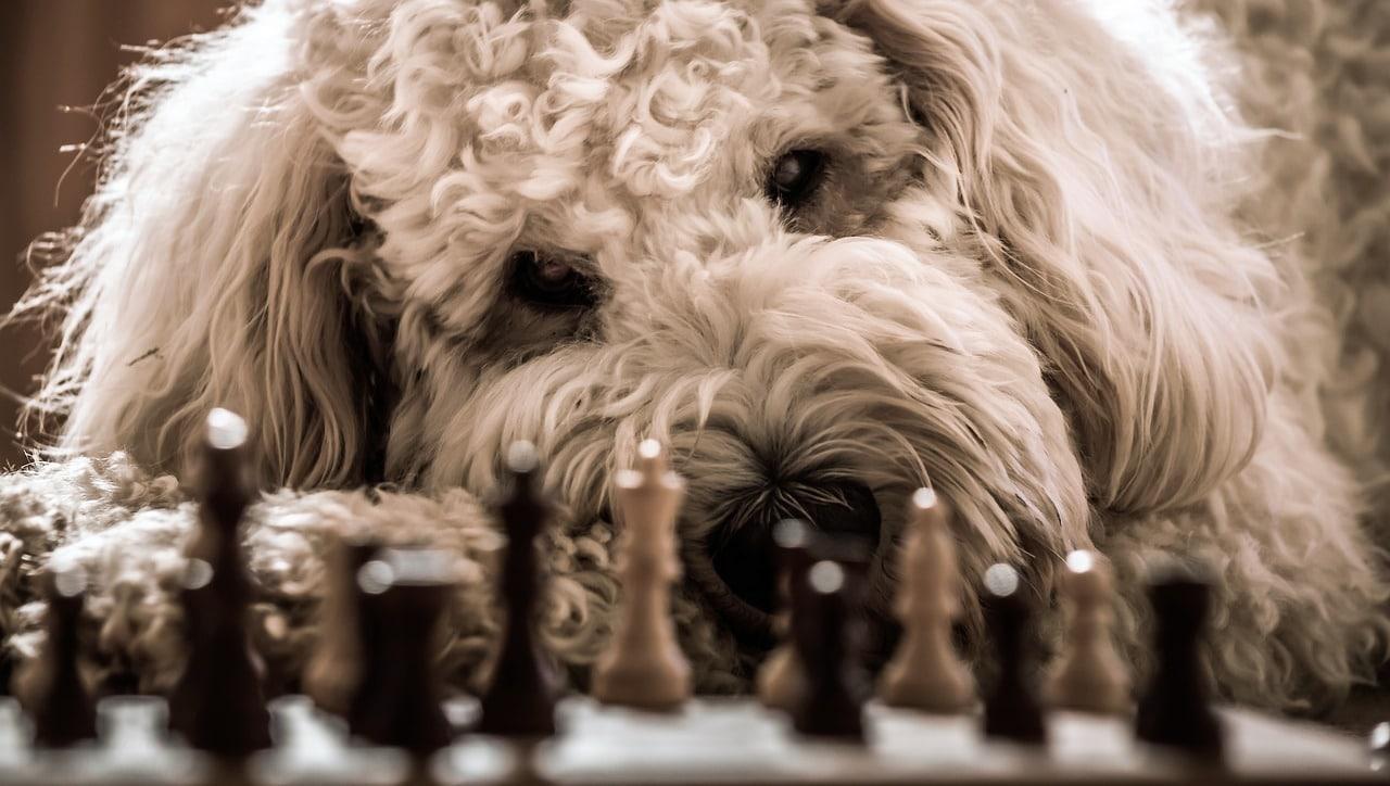 I cani interpretano quel che diciamo