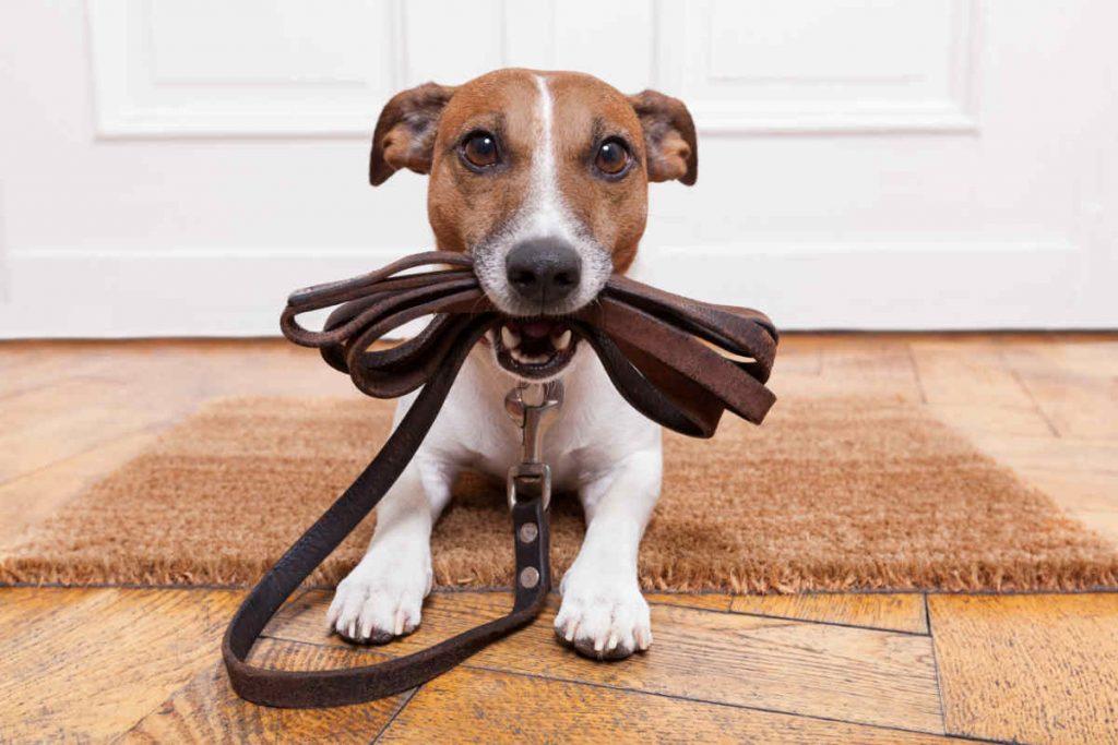 cane con guinzaglio
