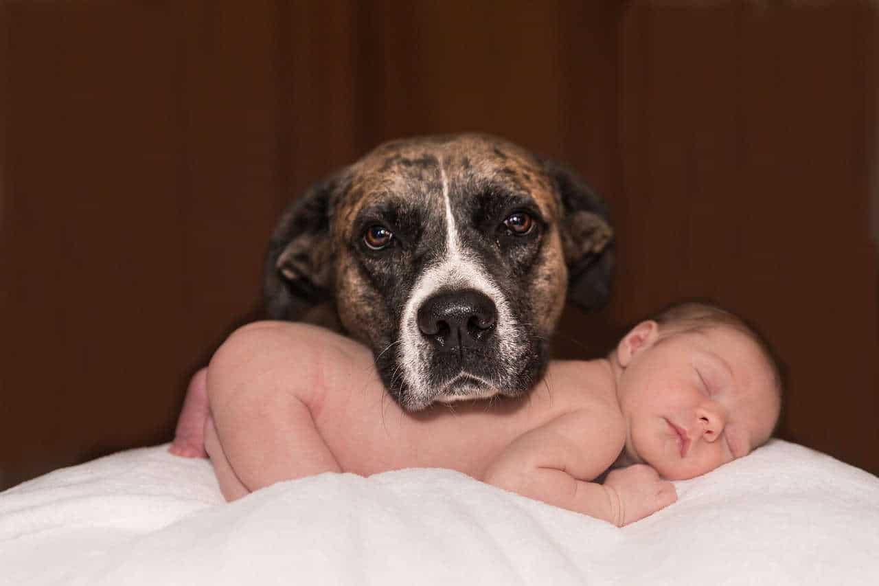 Mia moglie è incinta. Come faccio con il cane?
