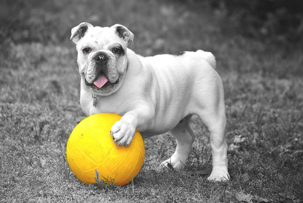 Impartire al cane le regole di casa