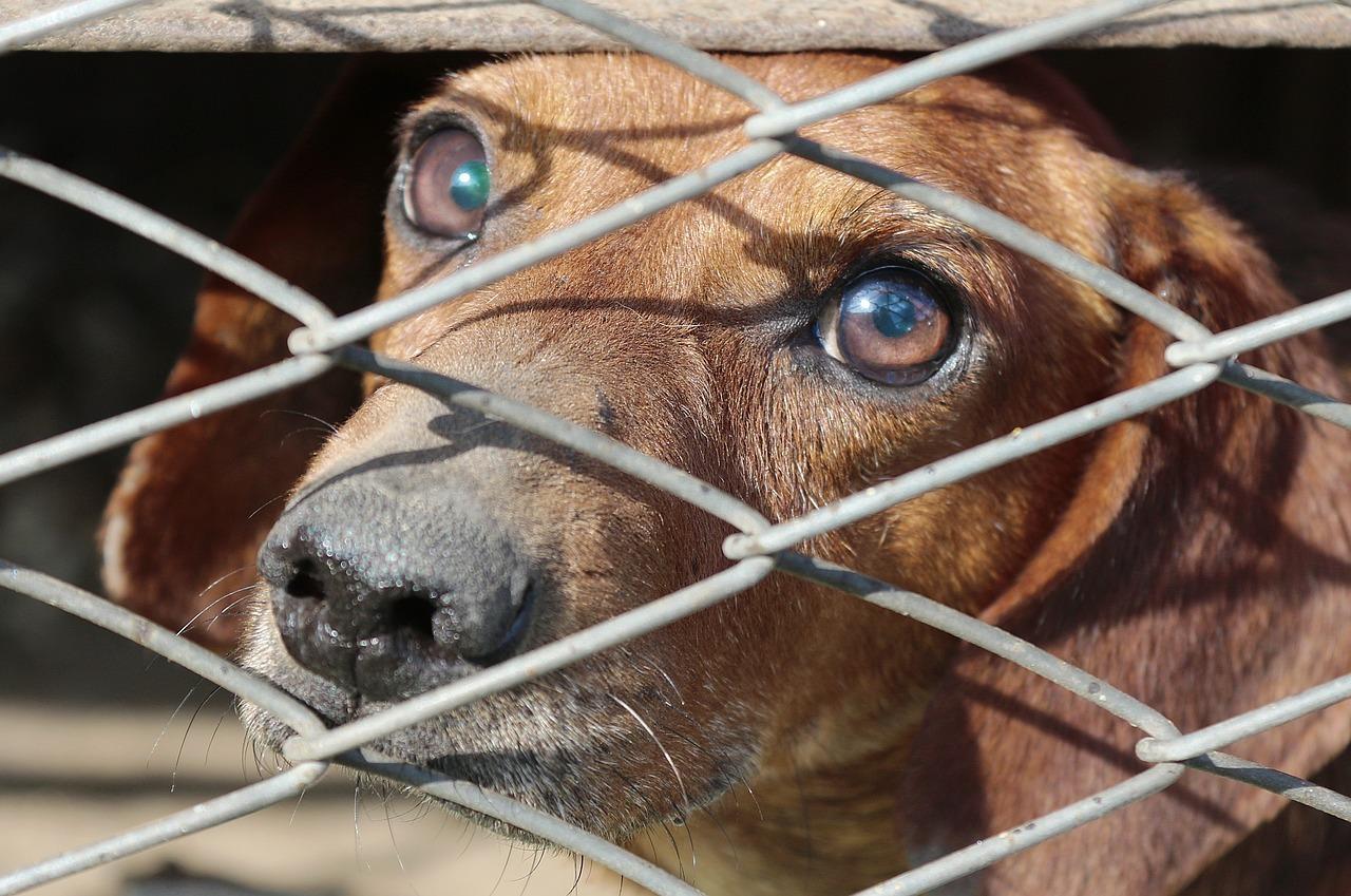 I falsi miti sui cani adottati in canile
