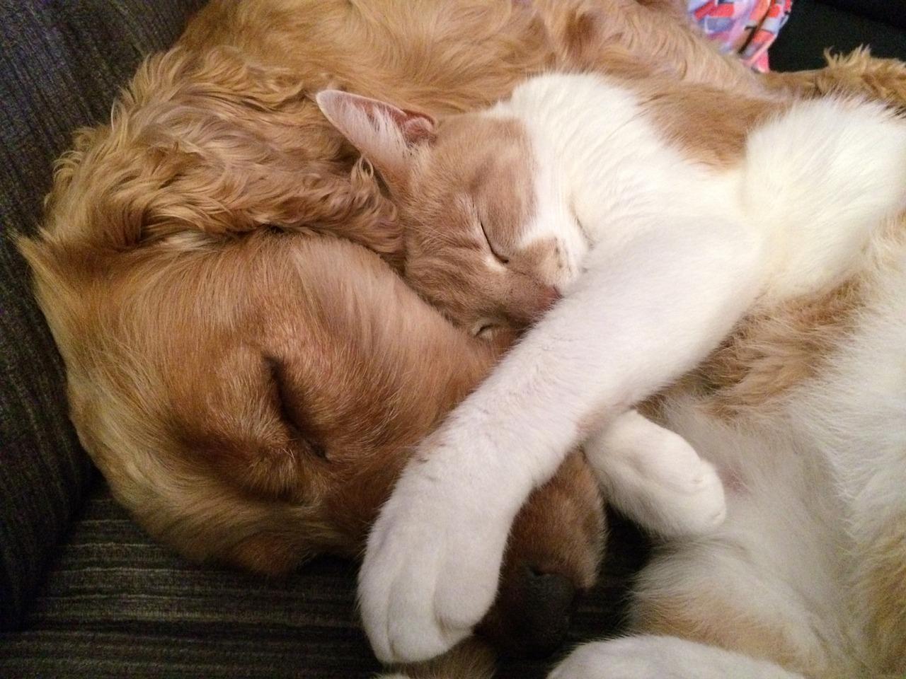Cane e gatto: la strana coppia