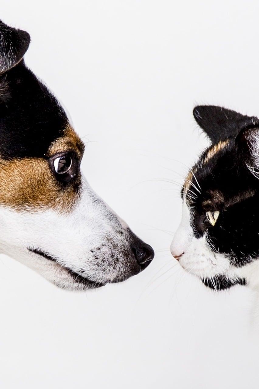 Cane e gatto: una convivenza possibile