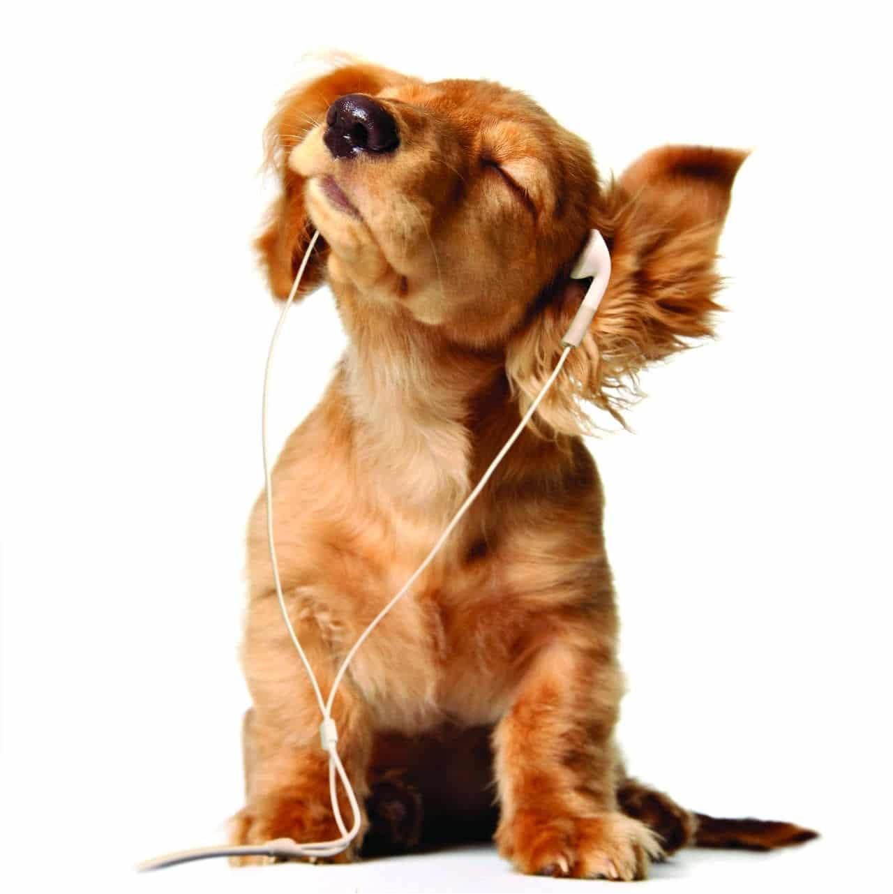 I cani e la musica
