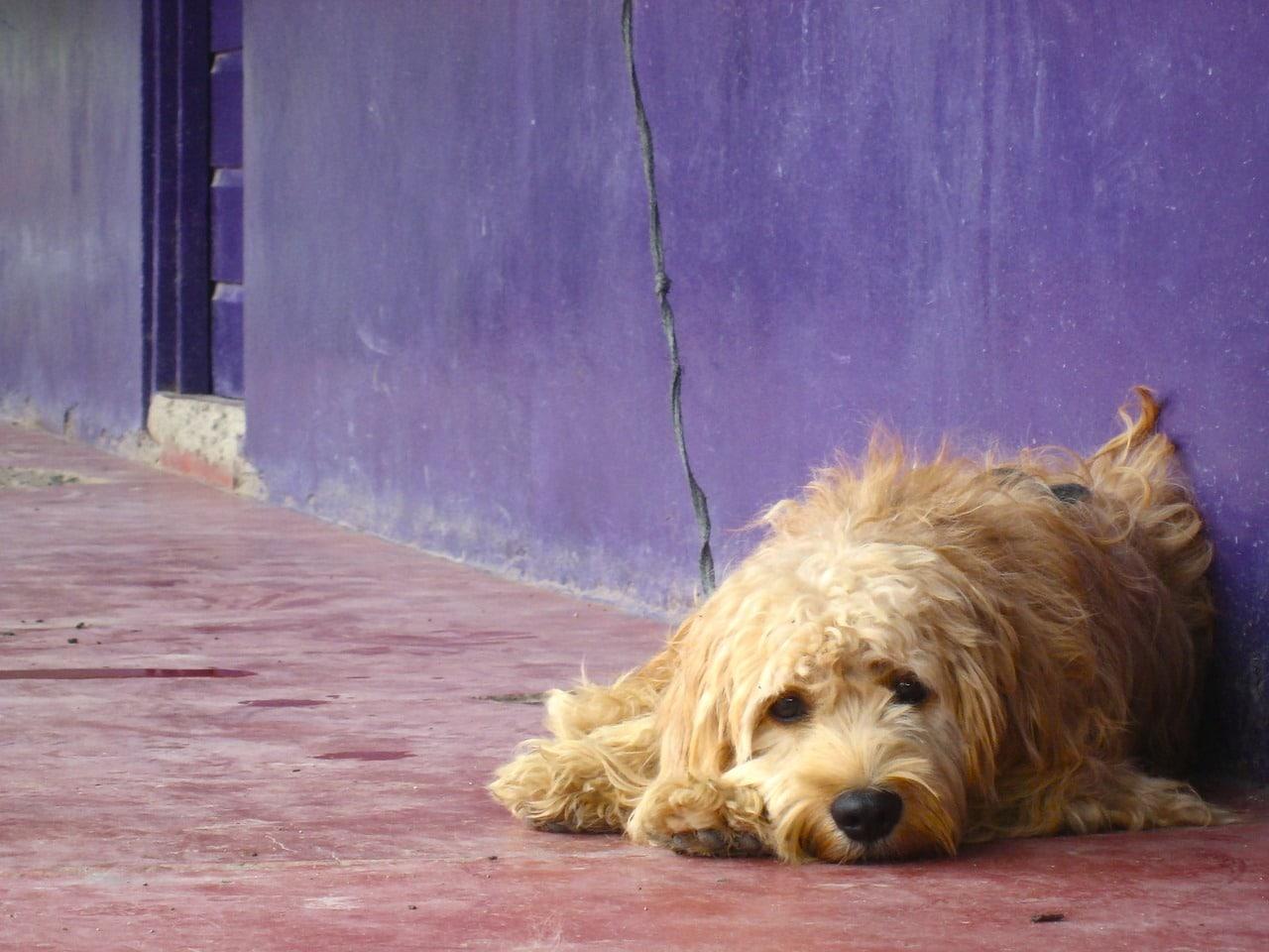 L'uso delle aree condominiali comuni con il cane