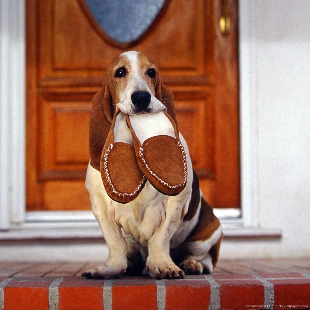 Portare le pantofole