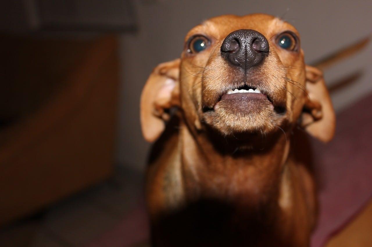 Come gestire l'aggressività del cane quando è vicino al cibo