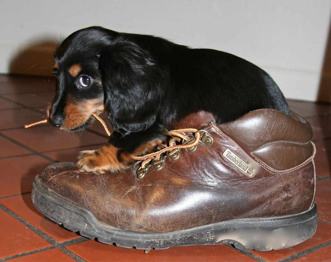 I falsi miti su come educare un cane