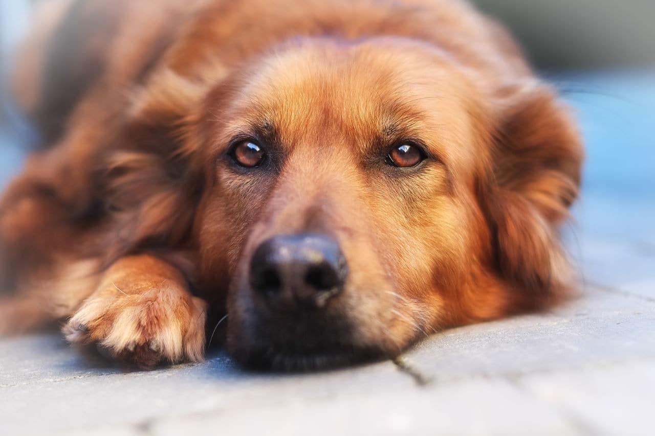Ho adottato un cane. Cosa succede ora?