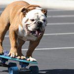 Andare in skateboard