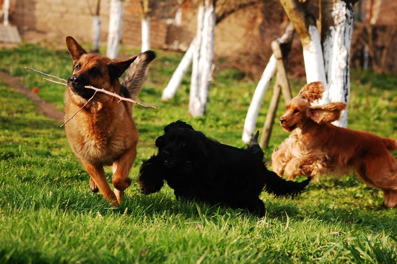Come comportarsi in un'area cani