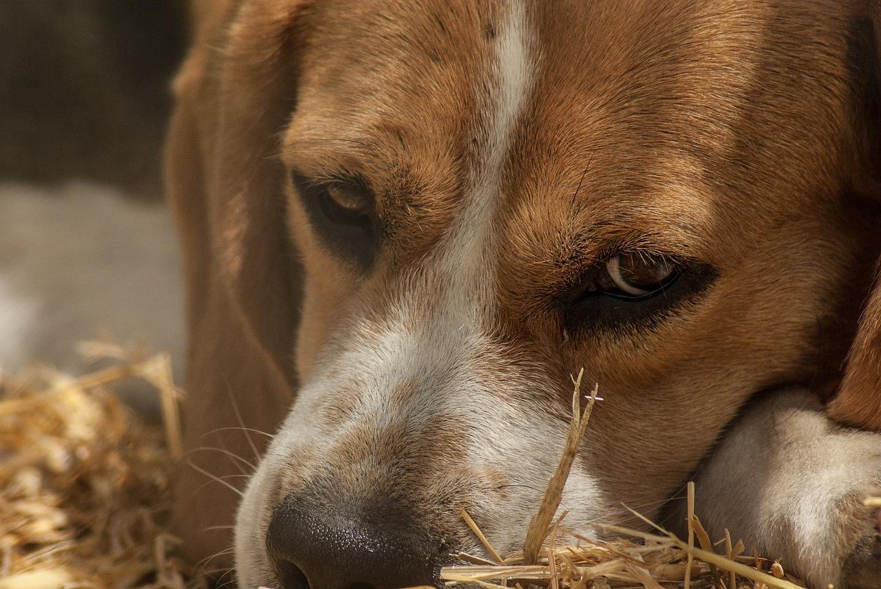 Il Mio Cane Mangia La Cacca Come Mai Io E Il Mio Cane