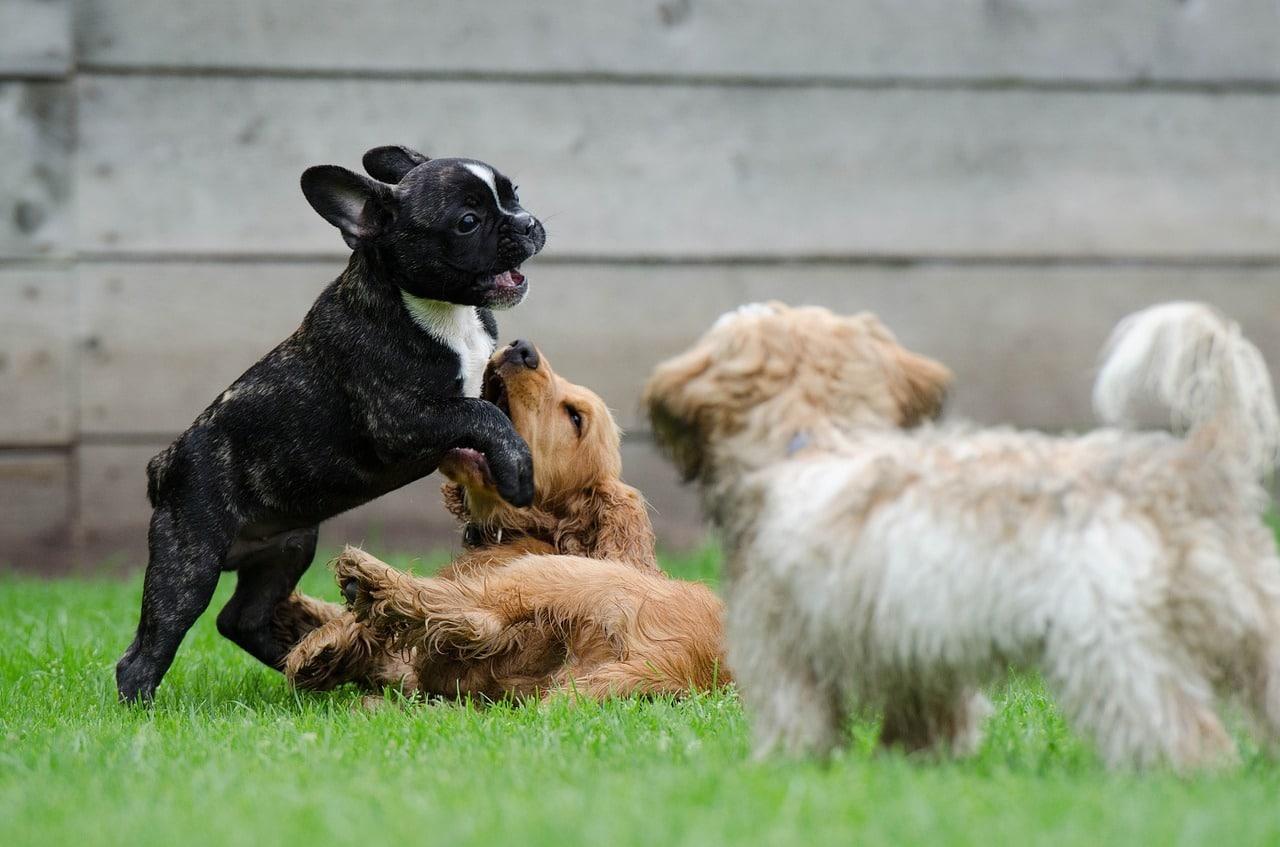 Il primo asilo per cani è a Napoli