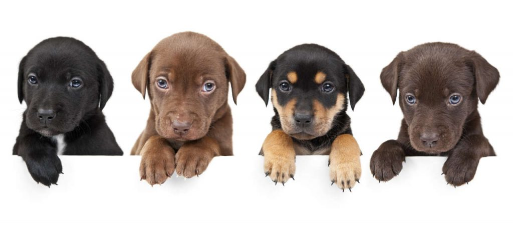 cuccioli-in-fila-1024x467