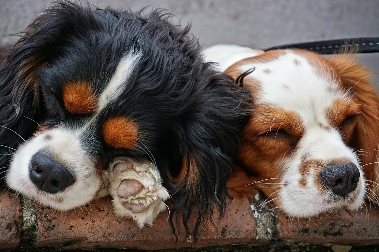 Programma per cercare il cane ideale? no grazie