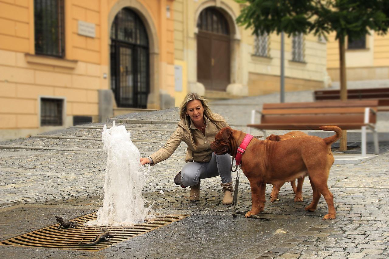 A passeggio con il cane: diritti e doveri
