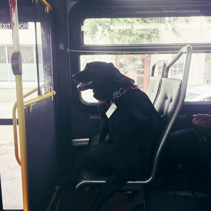 Eclipse: il cane che va al parco in autobus (da sola)