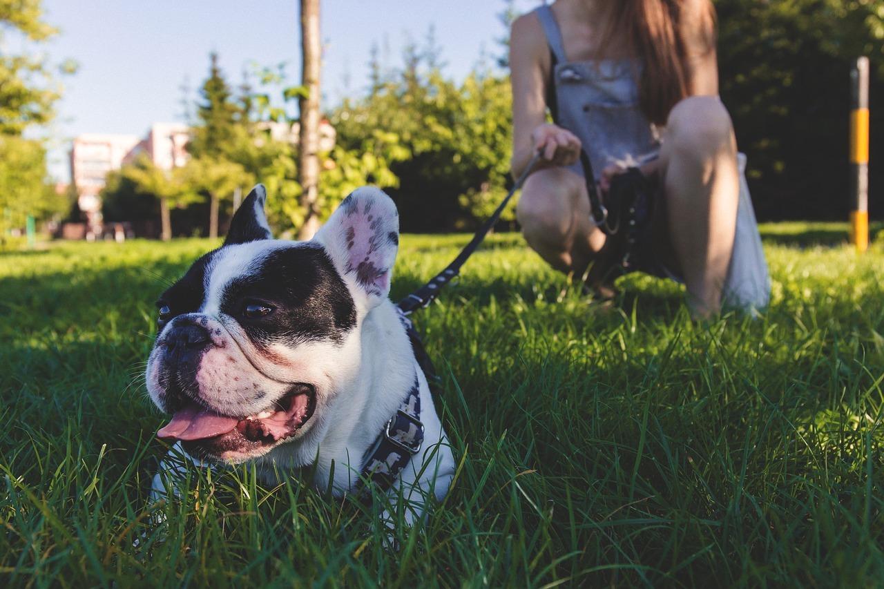 5 trucchi per educare il tuo cane