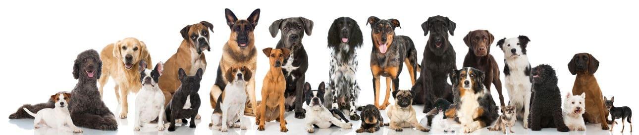 E' meglio un meticcio o un cane di razza?
