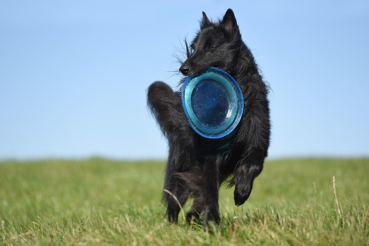 Giocare a frisbee