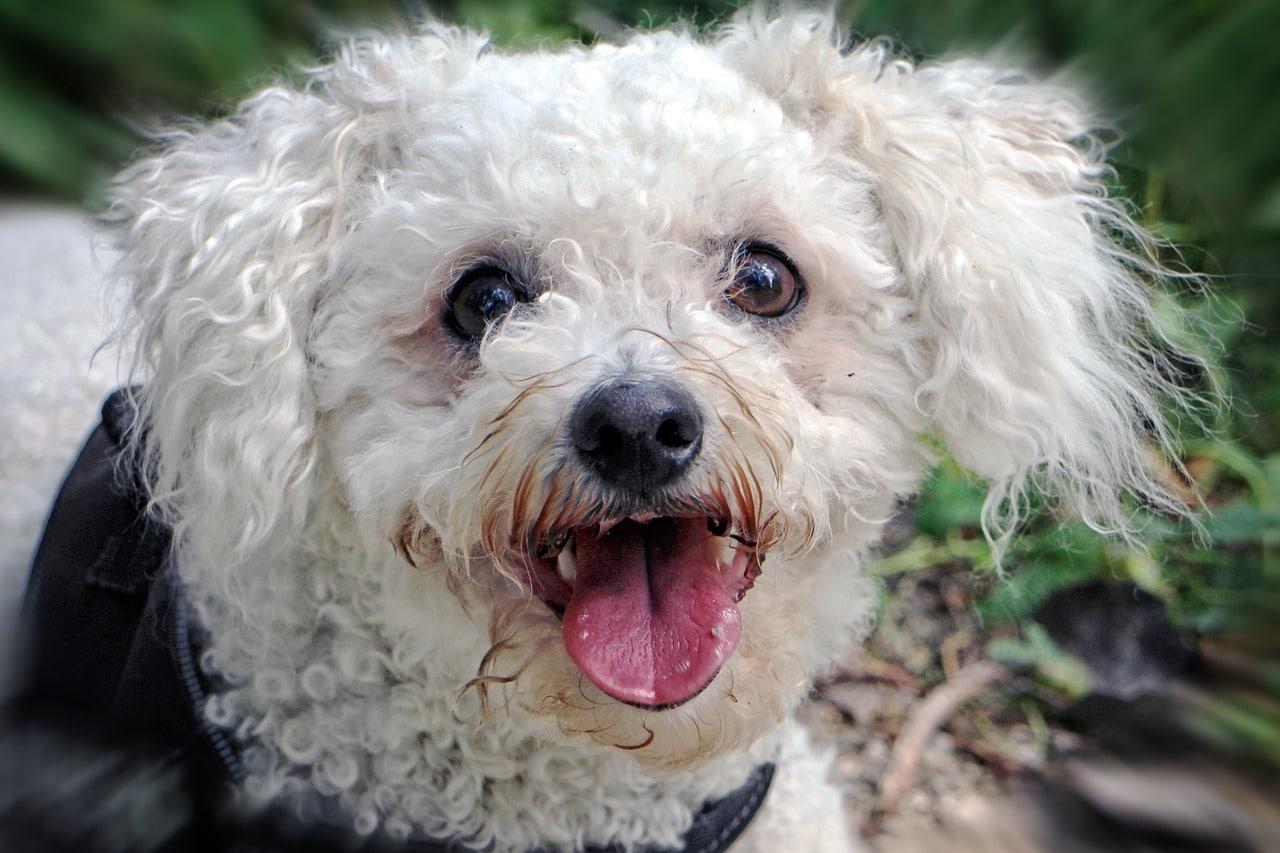 Capire il linguaggio del corpo del proprio cane