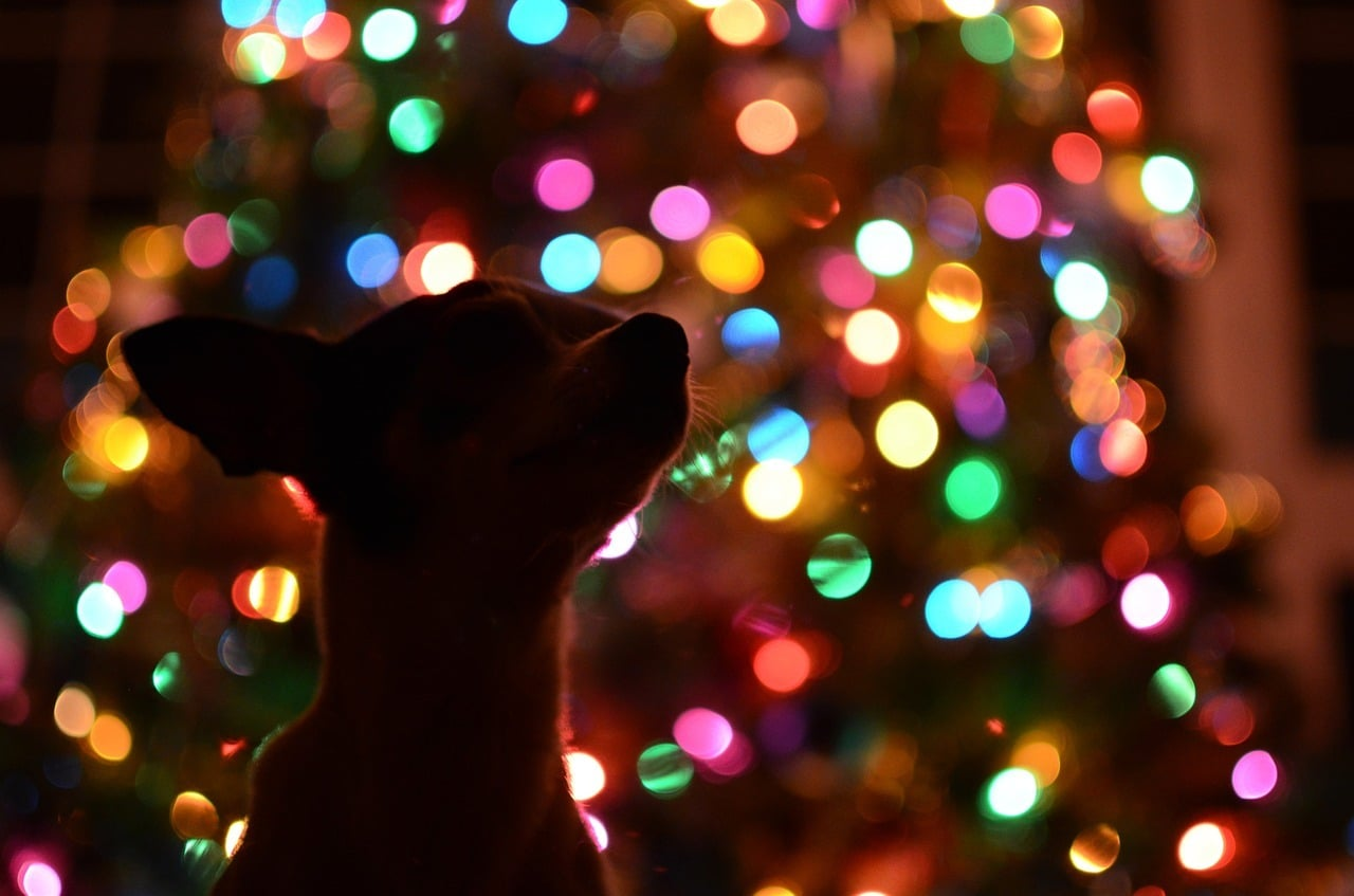 L'albero di Natale a prova di cane