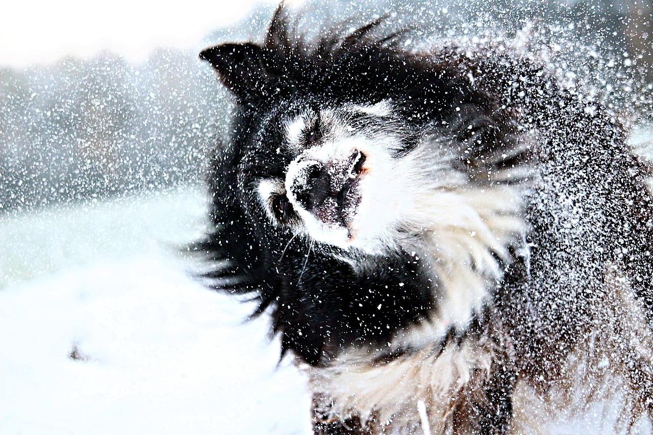 A cosa serve il cappottino per il cane?