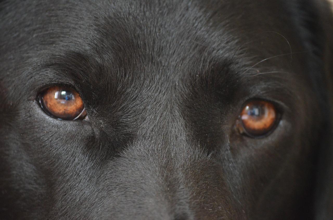 8 bugie sull'educazione del cane