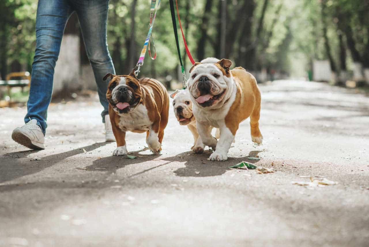 La passeggiata con il cane