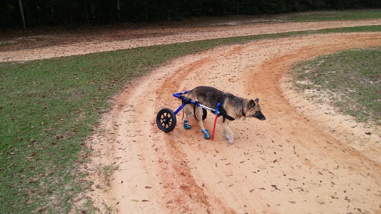 L'uomo che costruisce le sedie a rotelle per cani