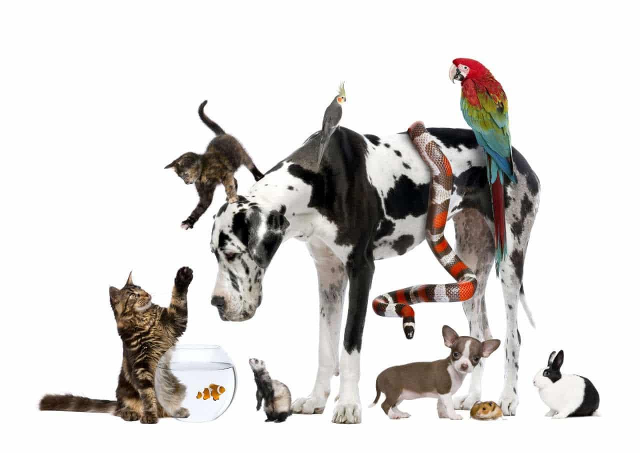 Socializzare il cane: una bufala o una necessità?