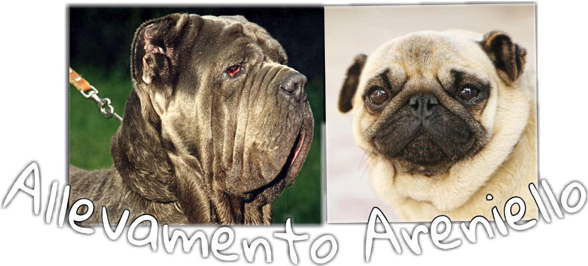 Areniello