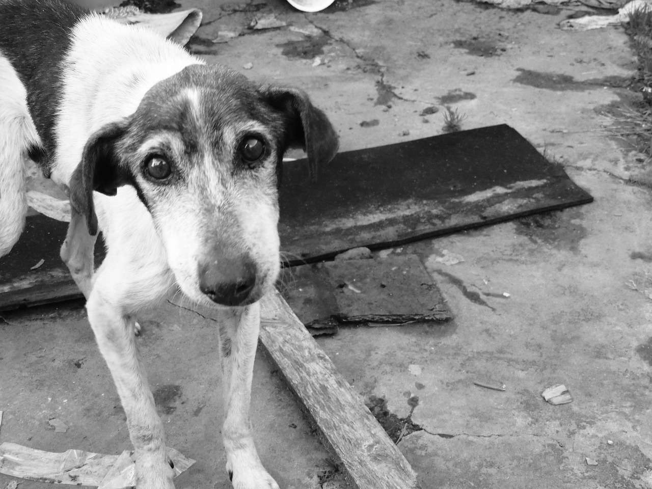 Cani randagi: le ultime stime parlano di oltre 700mila unità
