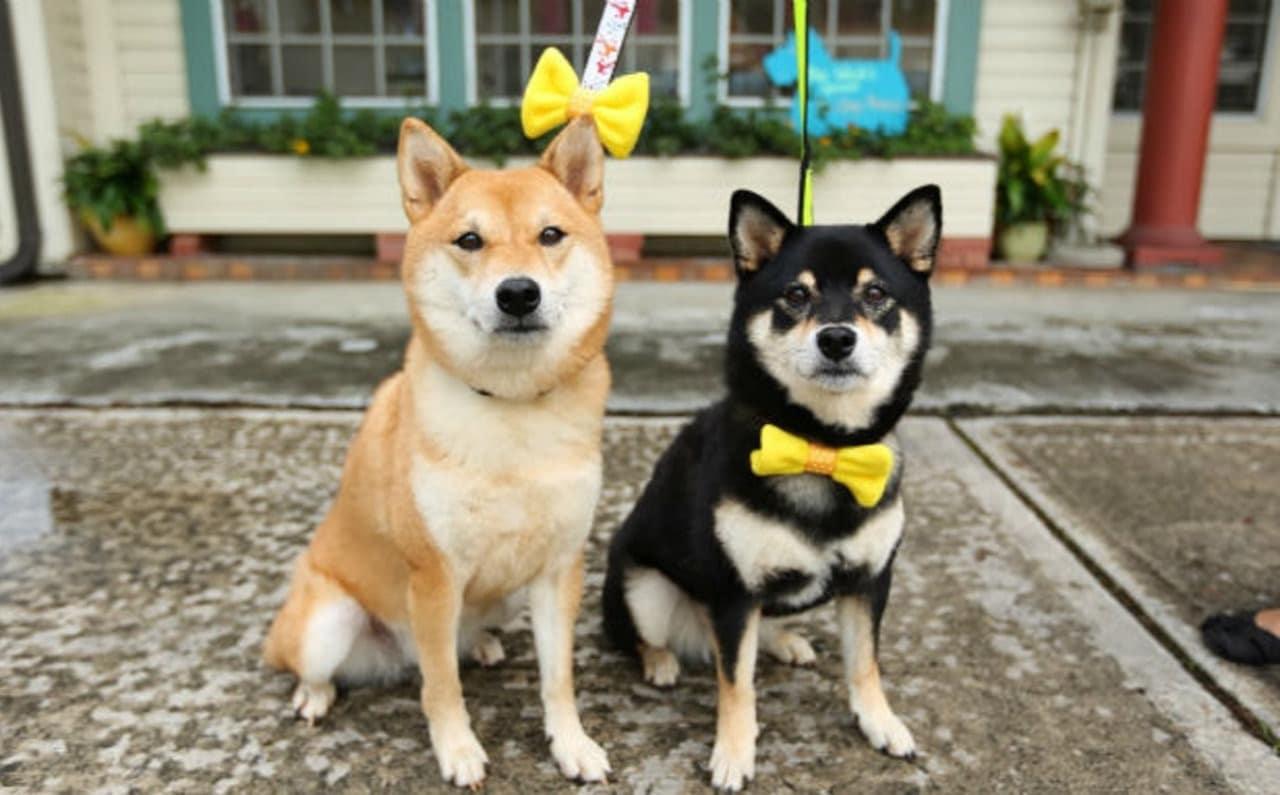 Cane con il nastro giallo: cosa significa?