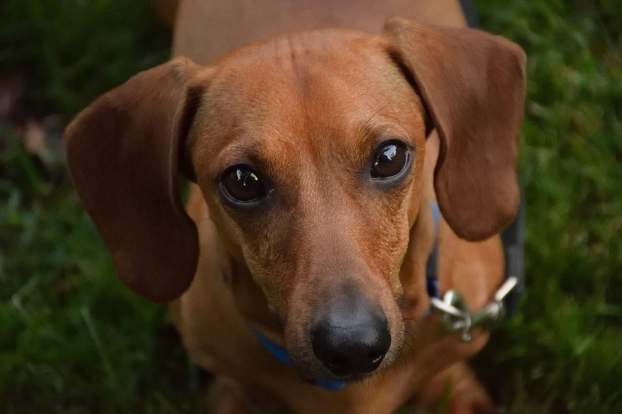 Germania: nasce il museo per cani