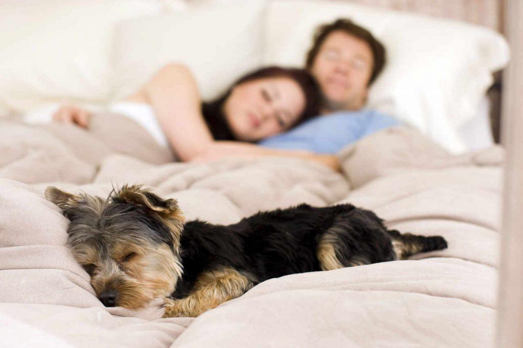cane a letto con padroni