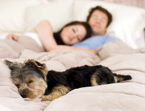 Vita da cani? in fin dei conti…