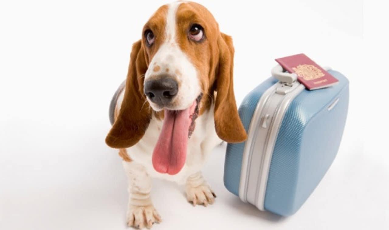 Trenitalia: ad Agosto sconti per i cani!