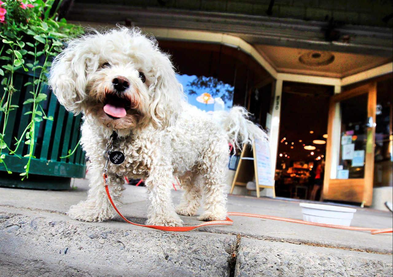 Entrare con il cane in un locale pubblico: è possibile?