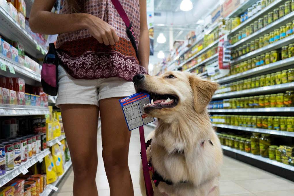 cane nel supermercato