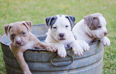 cuccioli-in-un-secchio-400x257