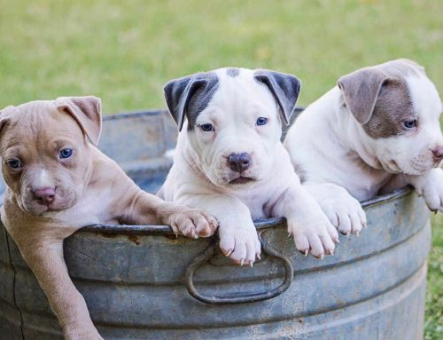 1 anno del cane corrisponde davvero a 7 anni umani?