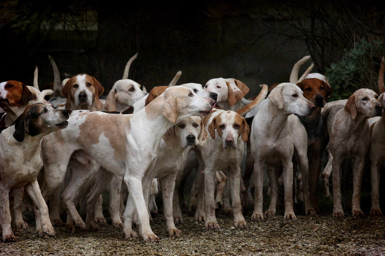 Aumentano i furti di cani!