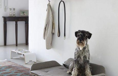 modern-dog-bed-ideas-460x295