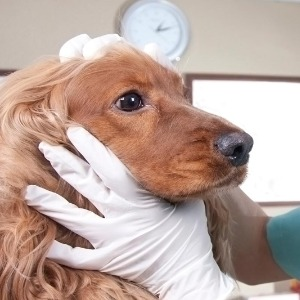 veterinario-rich