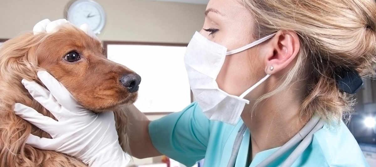Si possono tagliare coda e orecchie al cane?